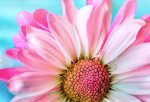 Hlavolam Květiny
