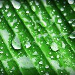 Hlavolamové přísloví - Chlorofyl