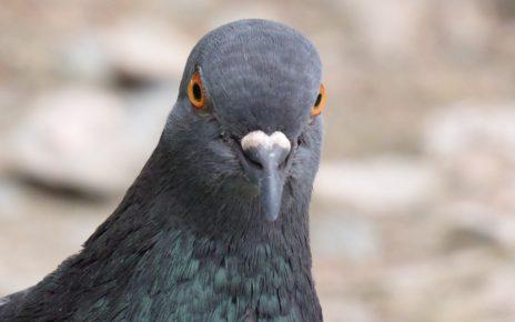 Hlavolamové přísloví - Ptáci