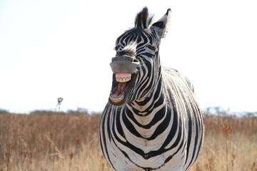 Zebra aneb Einsteinův hlavolam